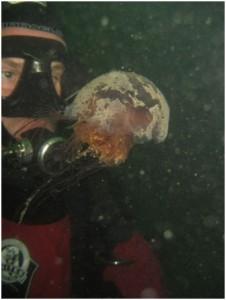Vancouver kayak club speaker with jellyfish
